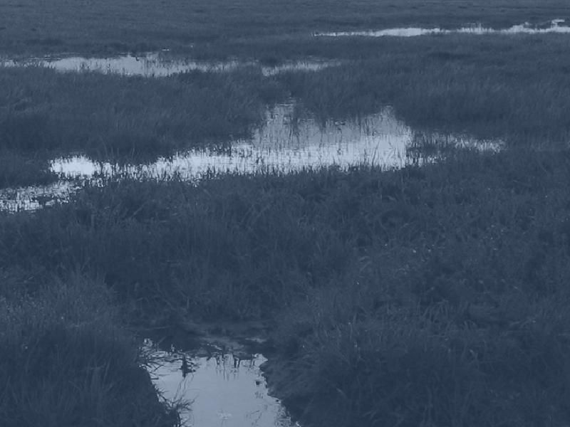 marshland wetscape