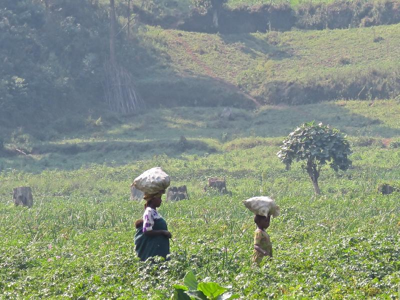 women working in agricultural field